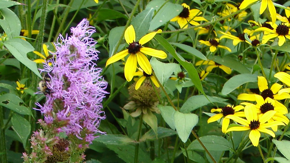 purple flower and yellow, brown flowers